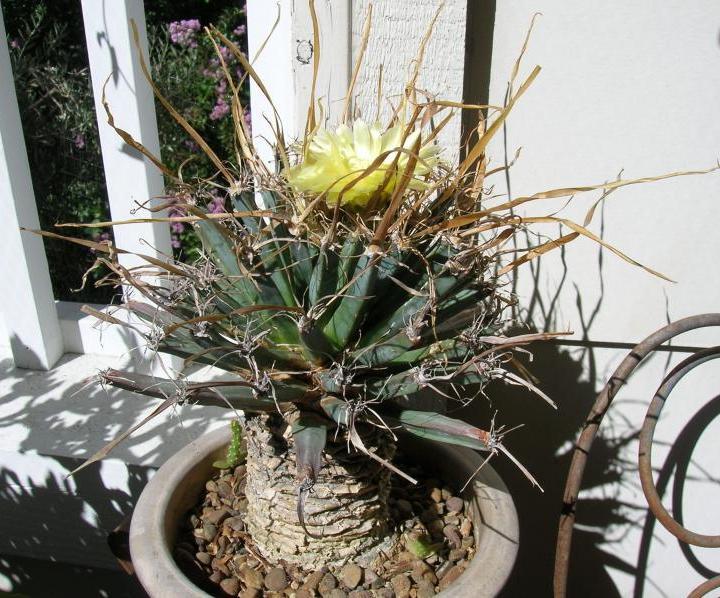 Суккуленты комнатные растения в интернетмагазине