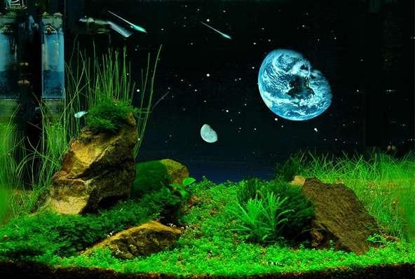 Фон для аквариума черный