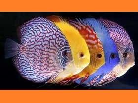 Статьи о домашних аквариумах, аквариумных рыбках и растениях